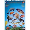 Mediterranean Species Guide